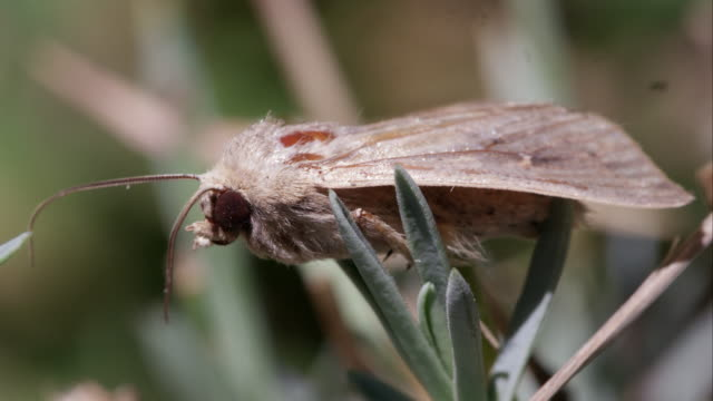 moth on foliage. - moth stock videos and b-roll footage