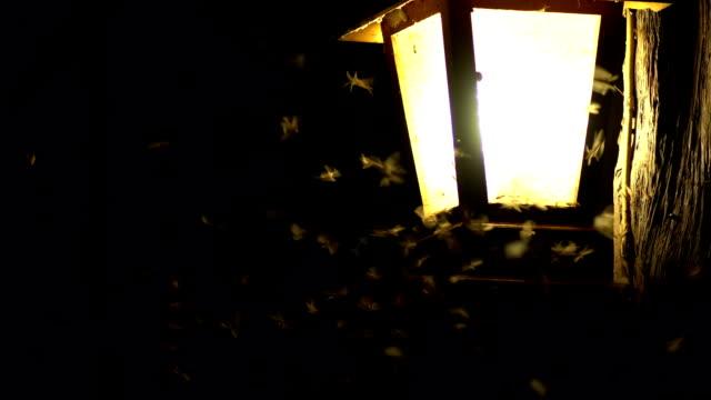 Lépidoptère jouant avec lampe lumière