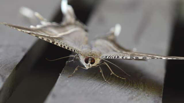 moth - moth stock videos & royalty-free footage