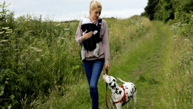 mother and baby walk with dog - dog walker stock videos and b-roll footage