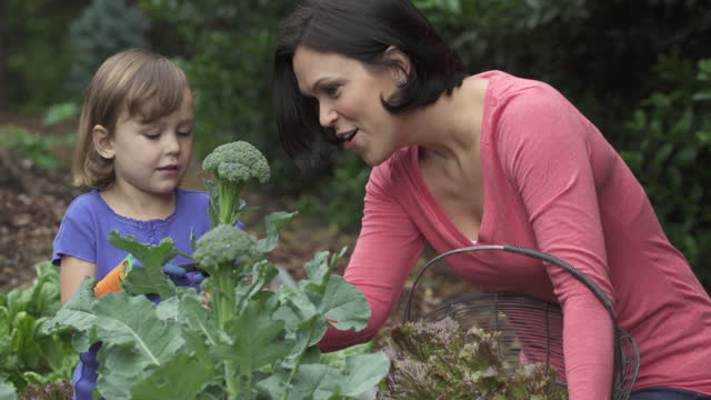 Mother and child picking broccoli in home garden