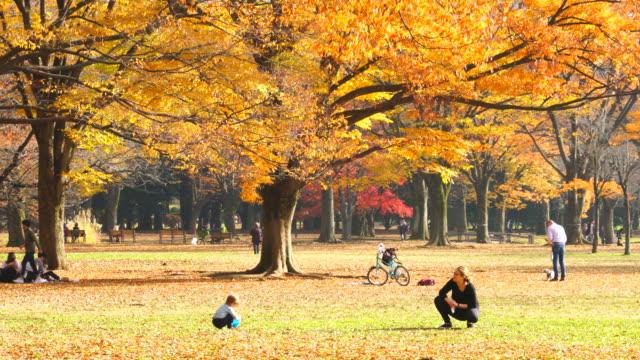mother and child stay under the autumn leaves trees on the fallen eaves at yoyogi park shibuya tokyo japan on november 29 2017. - höstlöv bildbanksvideor och videomaterial från bakom kulisserna
