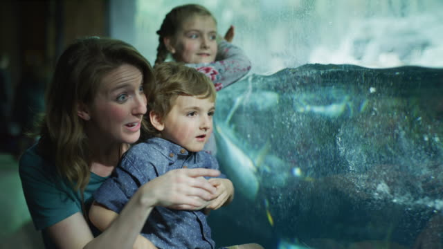 Mother and children crouching near glass in aquarium watching penguins / Draper, Utah, United States