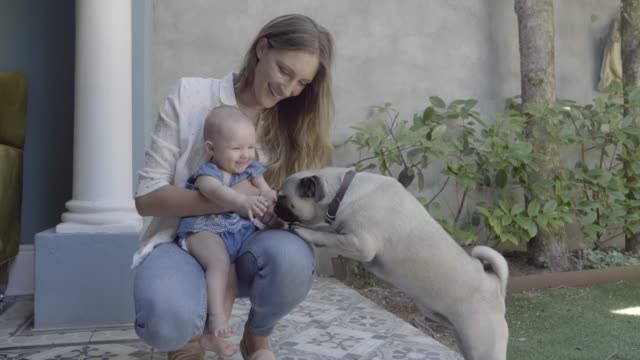mother and cute daughter playing with pug on patio - curiosity stock videos & royalty-free footage