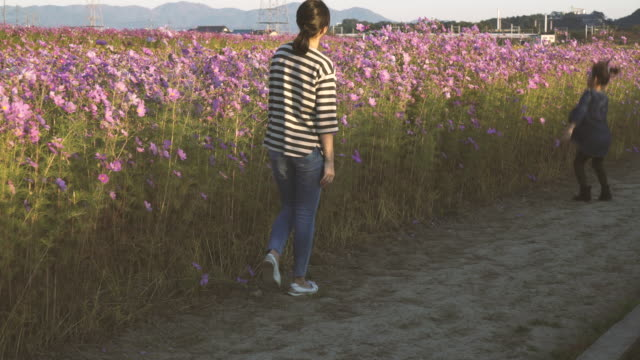mother and daughter are in the cosmos field - satoyama scenery stock videos & royalty-free footage