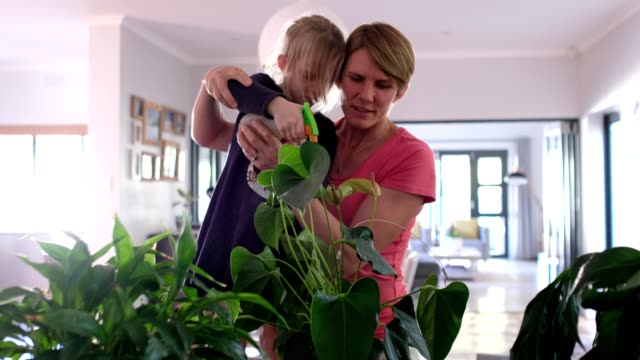 mother and daughter caring for all their indoor plants - family with one child stock videos & royalty-free footage
