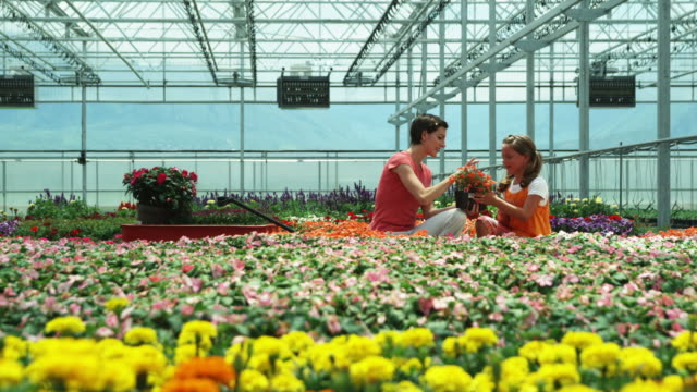 ms mother and daughter (8-9) choosing plants in a nursery / salem, utah, usa. - しゃがむ点の映像素材/bロール