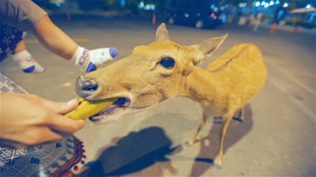 mother and daughter feeding a deer at night - deer family stock videos and b-roll footage