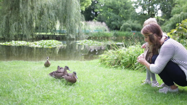 vídeos y material grabado en eventos de stock de mother and daughter feeding the ducks in park - sobretodo