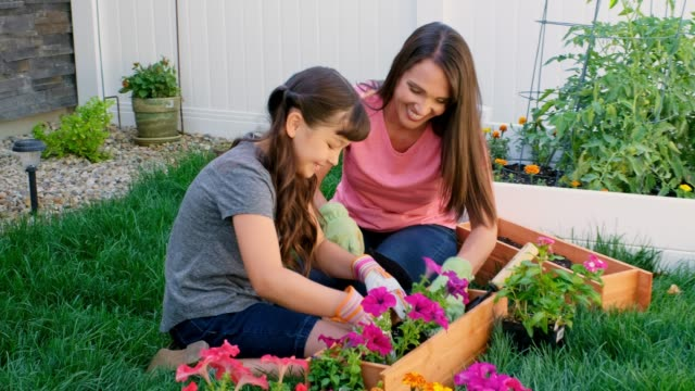 mother and daughter gardening - front or back yard stock videos & royalty-free footage