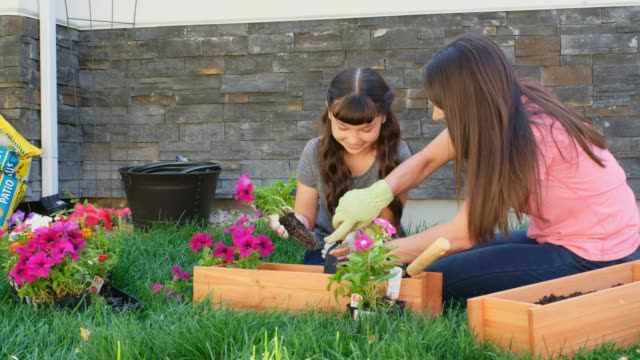 mother and daughter gardening - window box stock videos and b-roll footage