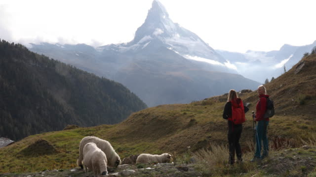 mother and daughter hike past sheep grazing on hillside, matterhorn distant - hill stock videos & royalty-free footage