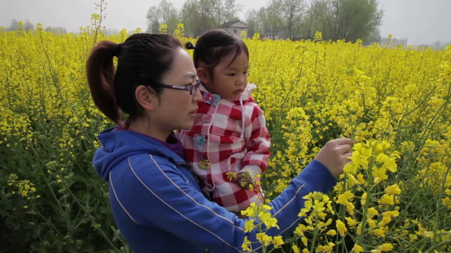 ms mother and daughter in yellow field of oilseed rape / hanzhong, shaanxi, china - crop stock videos & royalty-free footage