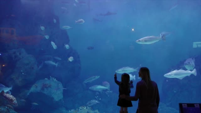 mother and daughter looking at fish in an aquarium - large group of animals stock videos & royalty-free footage