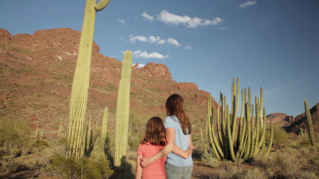 ms tu mother and daughter looking up tall saguaro cactus in desert / organ pipe cactus national park, arizona, united states  - cactus stock videos & royalty-free footage
