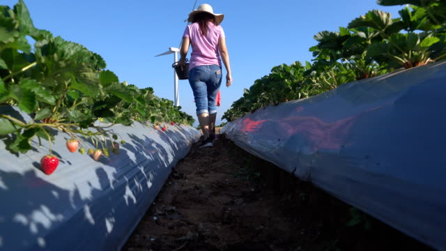 mother and daughter picking strawberries in the farm - sustainable energy stock videos & royalty-free footage