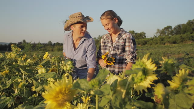 stockvideo's en b-roll-footage met ms mother and daughter (12-13) picking sunflowers in field / lebonan township, new jersey, usa - zonnebloem