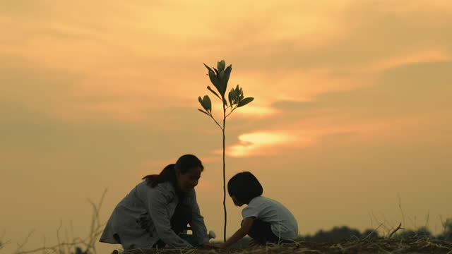 mother and daughter planting a tree at evening time. - planting stock videos & royalty-free footage