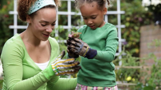 td ms mother and daughter planting lettuce in vegetable garden / richmond, virginia, usa - giardinaggio video stock e b–roll