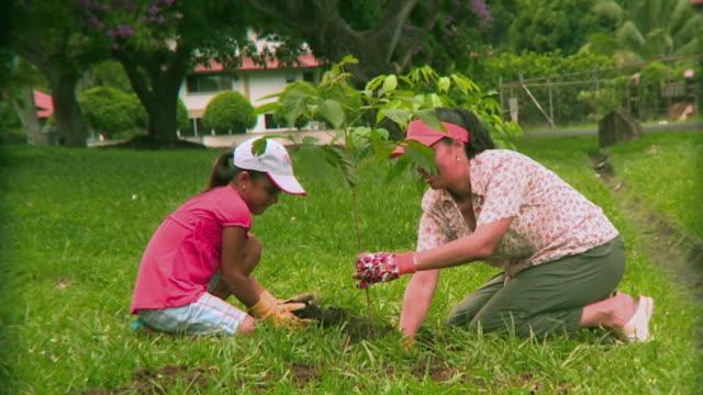 ms mother and daughter (8-9) planting tree, panama city, panama  - trädgårdshandske bildbanksvideor och videomaterial från bakom kulisserna