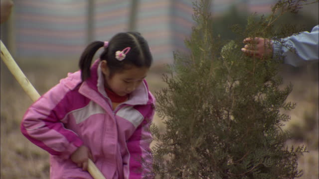 cu td tu mother and daughter planting young tree / beijing, china - planting stock videos & royalty-free footage