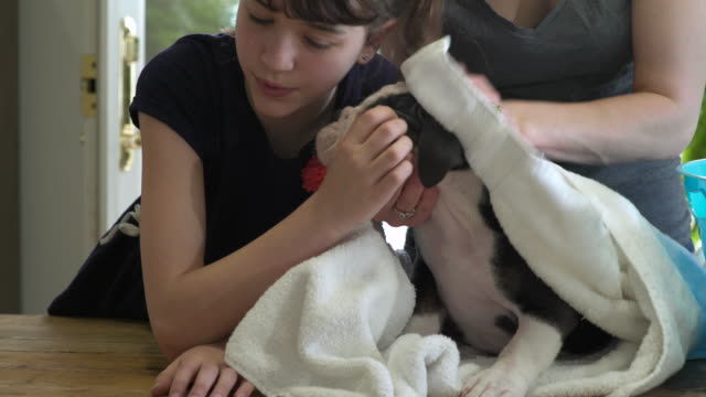 Mother and daughter rubbing a puppy with a towel after bath