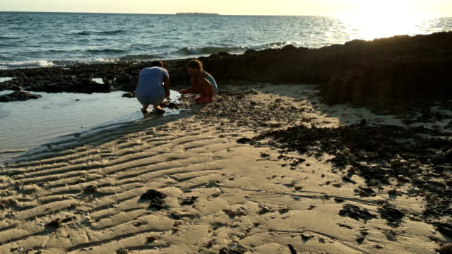 mother and daughter searching for seashells on beach - animal shell stock videos & royalty-free footage