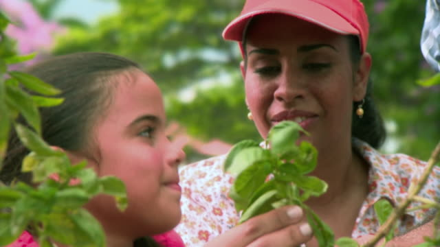 cu mother and daughter (8-9) smelling and harvesting oregano leaves from vegetable garden, panama city, panama  - smelling stock videos and b-roll footage