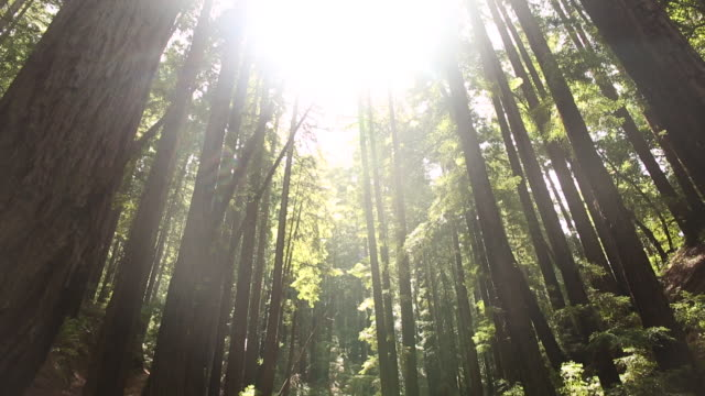 a mother and daughter standing underneath a canopy of redwood trees. - oakland california stock videos & royalty-free footage