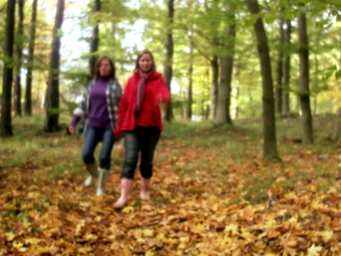 mother and daughter walking in a forest stockholm sweden. - chanterelle stock videos & royalty-free footage