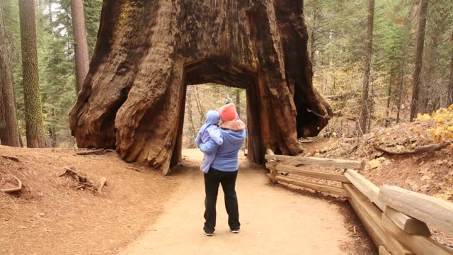 a mother and daughter walking together outdoors in yosemite national park. - national park stock videos & royalty-free footage