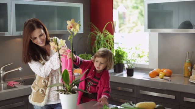 ms mother and daughter (2-3) watering potted orchid flower with watering can in kitchen / kleinmachnow, brandenburg, germany - pot plant stock videos and b-roll footage