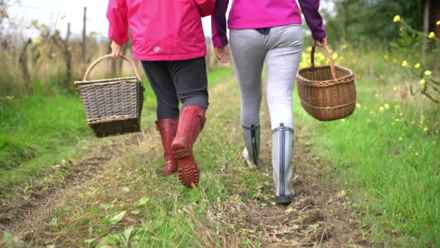 ms mother and daughter with baskets walking in rural field - grass family stock videos & royalty-free footage