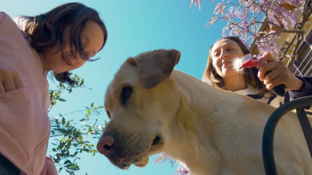mother and daughter with dog - 10 11 anni video stock e b–roll