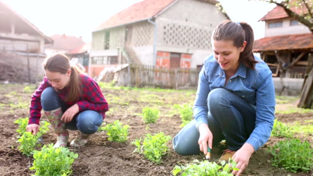mother and daughter working in garden - gardening stock videos & royalty-free footage