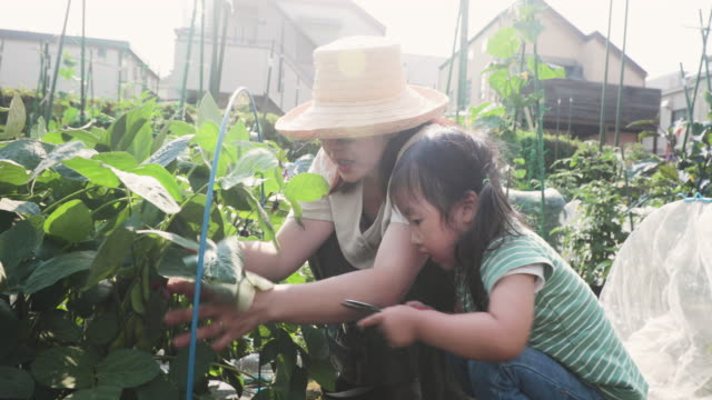 mother and daughter working in the farm - agricultural activity stock videos & royalty-free footage