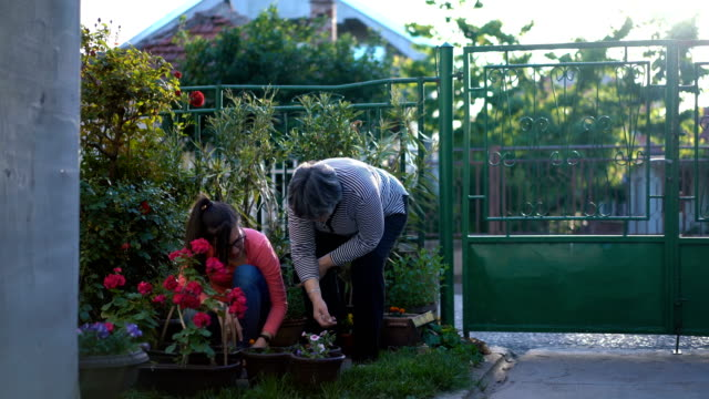 mother and daughter working in the garden - show garden stock videos & royalty-free footage