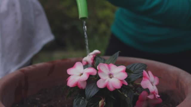 mother and her little girl watering a flower they planted in a pot - watering can stock videos & royalty-free footage