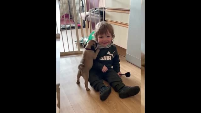 mother and pug breeder lynne flynn posted a video of her one-and-a-half-year-old son, vince, playing with three of her 8-week-old pug puppies at... - family with one child stock videos & royalty-free footage
