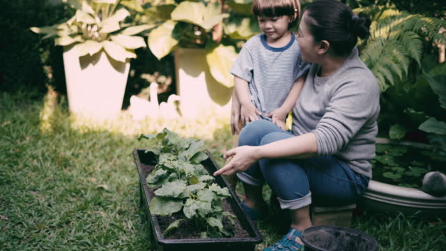 mother and son are planting vegetables - agricultural activity stock videos & royalty-free footage