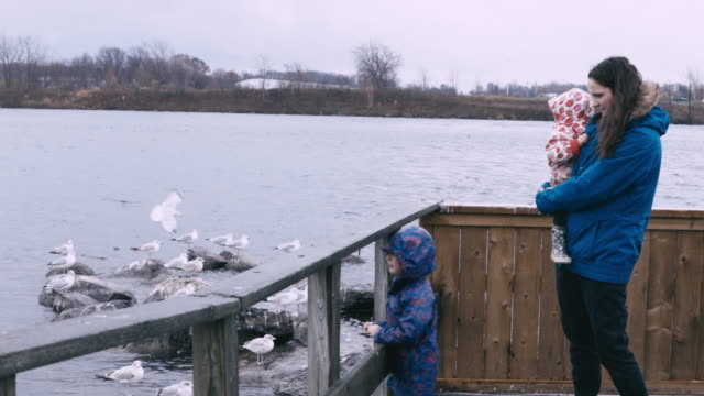 mother and son enjoying feeding the ducks near the lake - coat stock videos & royalty-free footage