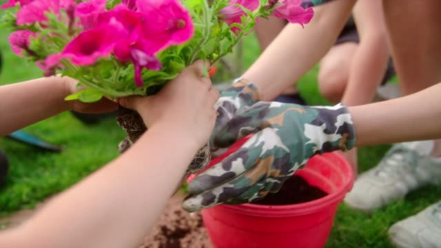 mother and son plant flowers in the garden - gardening glove stock videos & royalty-free footage