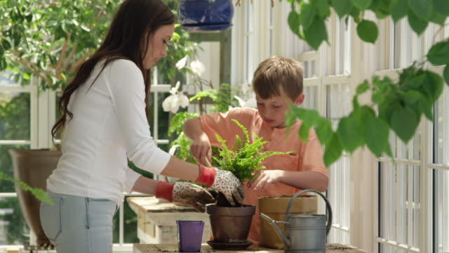 vídeos de stock e filmes b-roll de mother and son potting up plants in greenhouse - vaso de flor