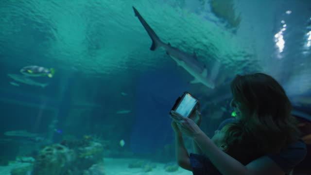 mother and son recording shark swimming in aquarium using digital tablet / draper, utah, united states - linne topp bildbanksvideor och videomaterial från bakom kulisserna