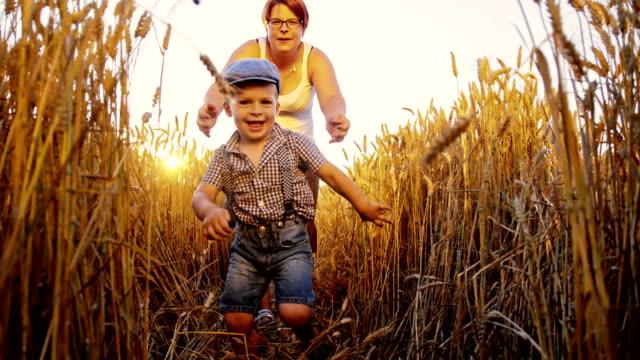 SLO MO mor och son kör i fält av vete