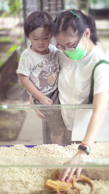 vidéos et rushes de mère et fils touchant dragon barbu - son
