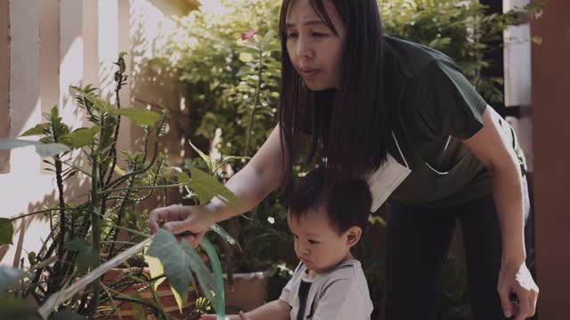 vídeos y material grabado en eventos de stock de madre e hijo resogar plantas en el patio trasero - son