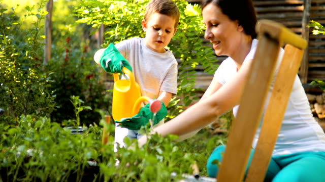 vidéos et rushes de mère et fils travaillent dans leur jardin potager - jardin potager