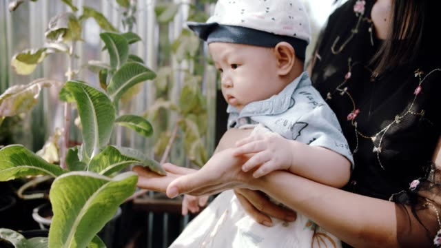 mother and son working in vegetable garden - baby boys stock videos & royalty-free footage