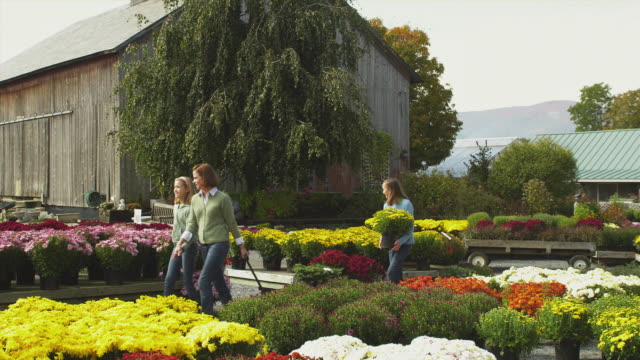 vidéos et rushes de ms pan mother and two daughters (11-12) pulling cart with potted plants through garden center, manchester, vermont, usa - manchester vermont